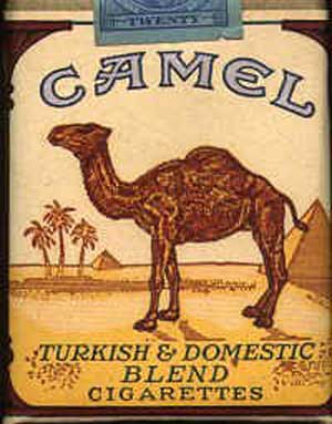 Size of a Camel